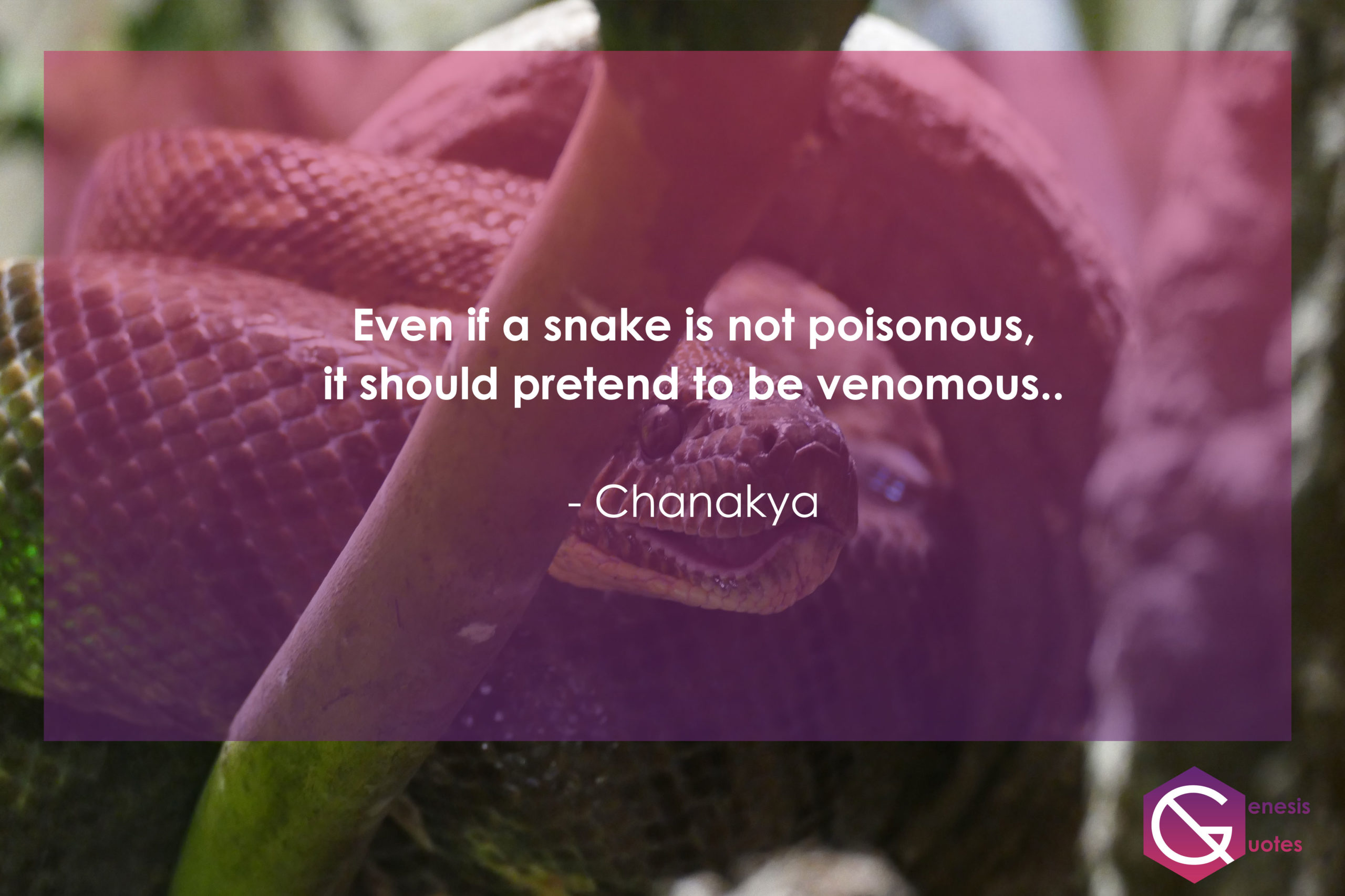 snake poisonous quotes